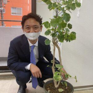 東横園芸で観葉植物を購入!緑が入ることの効果とは?【スタッフブログ】